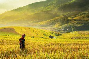 Viaggio In Famiglia In Vietnam E Cambogia 14 giorni Eccellente Vietnam 14 giorni