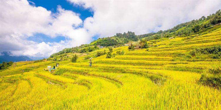 Clima Vietnam