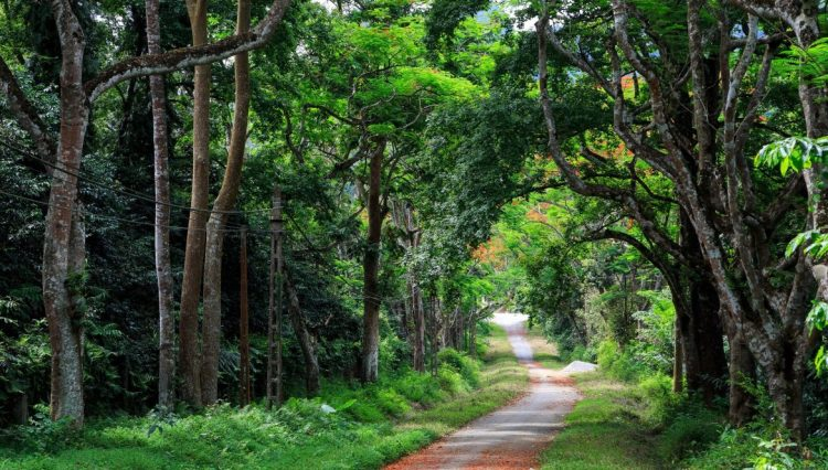 Parco Nazionale di Cuc Phuong, Ninh Binh - Tour del Vietnam e Cambogia