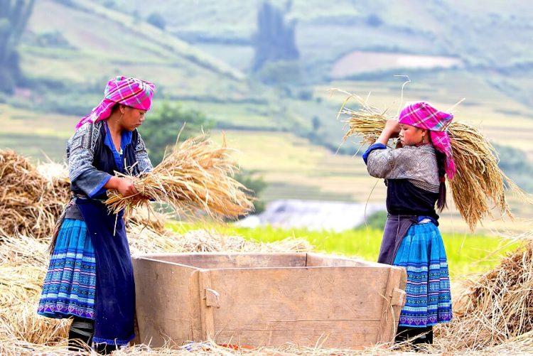 Moc Chau - Vacanza estiva Vietnam
