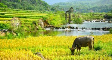 Essenze del Vietnam nei 16 giorni